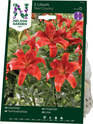 Flocklilja Lilium Red County