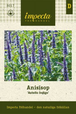 Anisisop 'Astello Indigo'