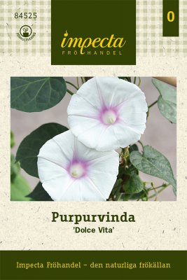 Purpurvinda, 'Dolce Vita'
