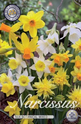 Botanisk Narciss Narcissus Mix
