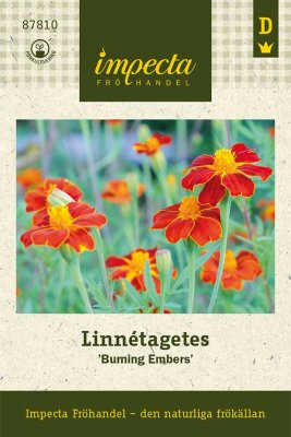 Tagetes, Linné-, 'Burning Embers'