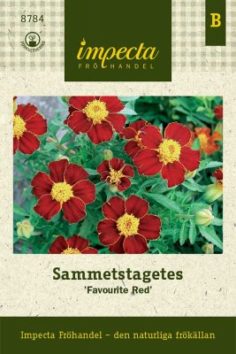 Tagetes, Sammets-, 'Favourite Red'